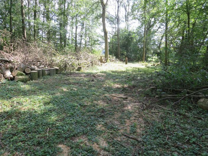 Strook tussen de Beneden Slinge en de Adderbroekwei. De bomen en struiken zijn alvast gekapt om herstel van het relief (afgraven opgebrachte grond) mogelijk te maken (zie een van de kaarten hierboven).