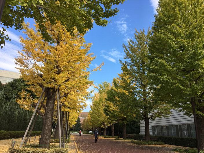 昭島市の競歩教室、オサモミウォーキング教室!昭島駅北口イチョウ並木通りで開催中。