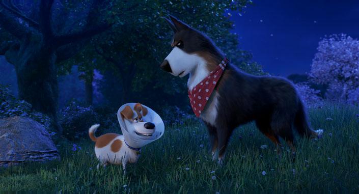 Pets 2 Szenenbild: Max (l, Patton Oswalt) erhält von Schäferhund Rooser (r., Harrison Ford) Lektion in Sachen Mut und Stärke.