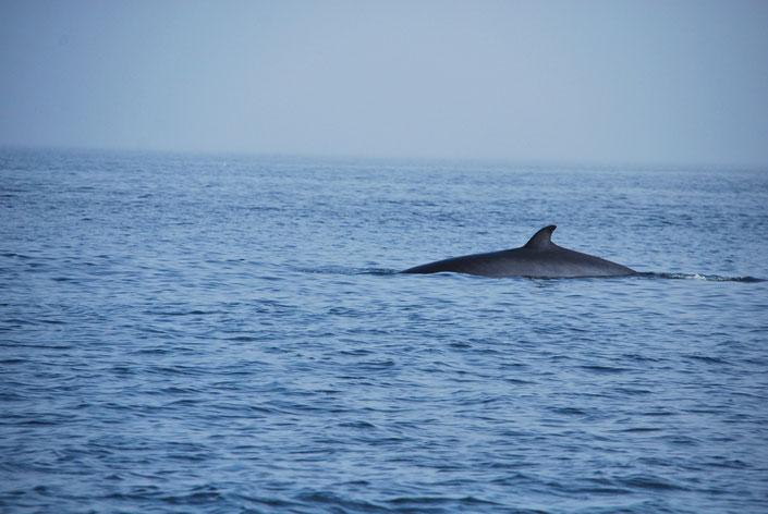 Whale Watching Quebec Kanada Ste Katherine