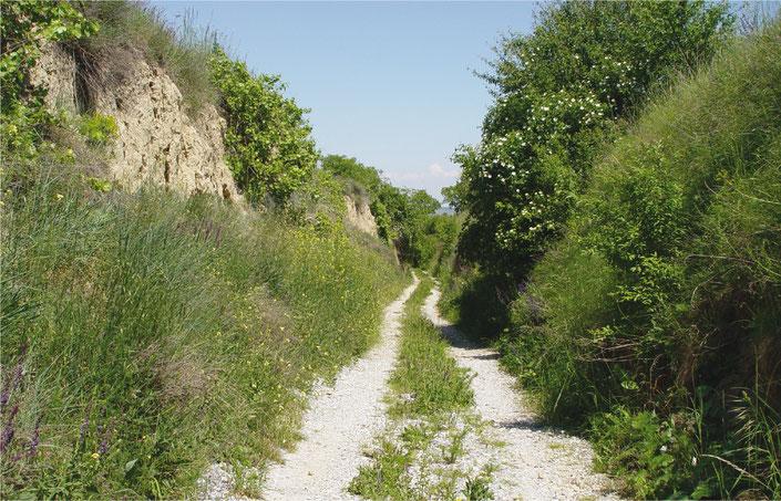 Heinz Wiesbauer: Naturschutz und Landschaftspflege
