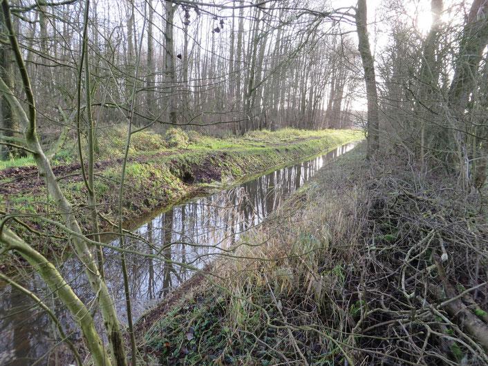 De Beneden Slinge bij het Populierenbos (dec. 2019). De drainerende werking zal worden opgeheven. Hierdoor zal de beek geen kwelwater meer afvangen. Verder stroomafwaards zal de beek ondieper gemaakt worden.