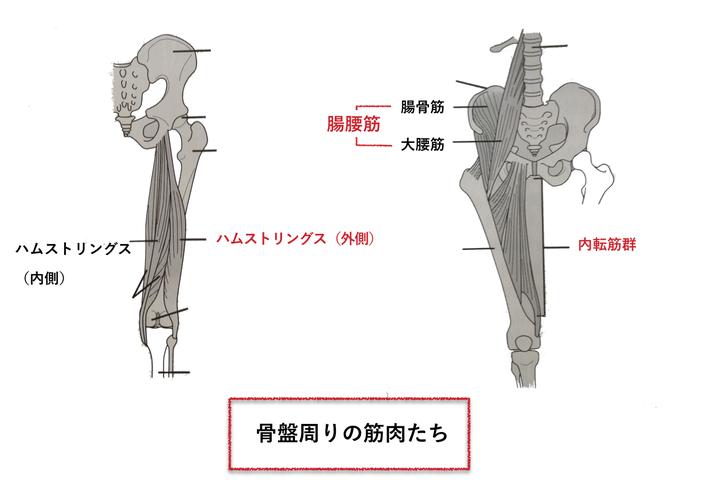 ターンアウトで使う筋肉