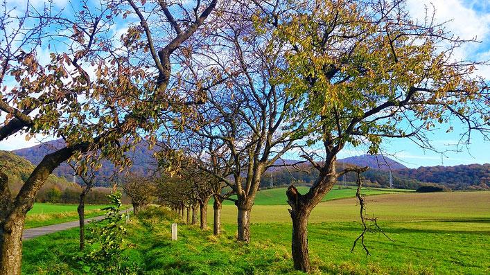 ~ Bild: Die 'Hohe Tafel' (Tafelberg, re.) bei Brüggen (Leine) ~