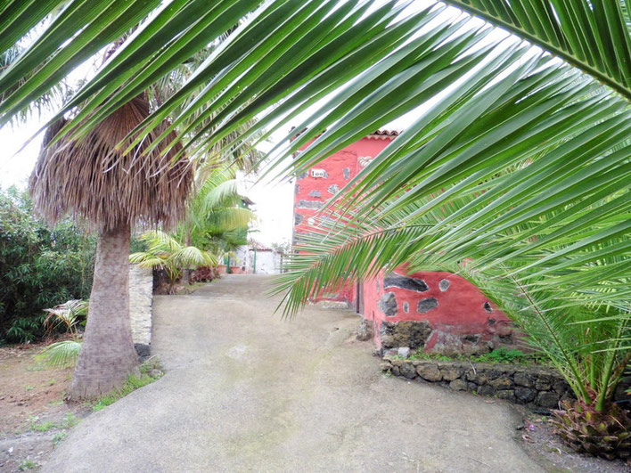 Renoviertes Zufahrt und Fincahaus mit Palmen als Einfassung.