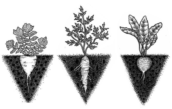 Nina Georgiev Illustration Roots