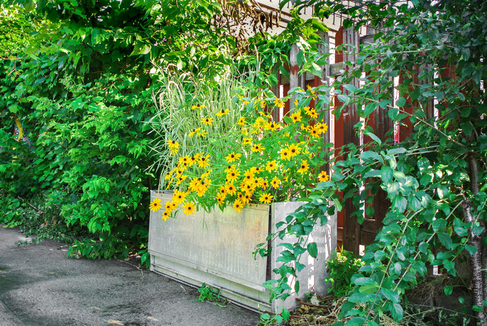 bacs à fleurs pour projet de permaculture à Montréal