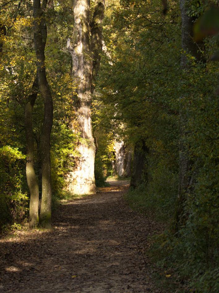 Wanderung in Feldwies