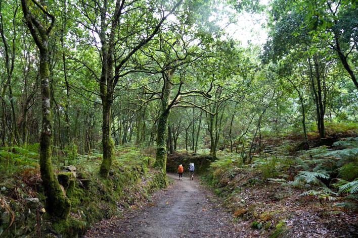 Kelias į Fisterą per Galisijos miškus / Foto: Kristina Stalnionytė