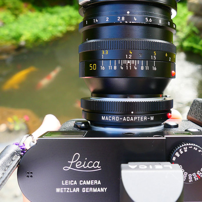 Leica M-P type 240 Noctilux 50mm F1 Macroadapter