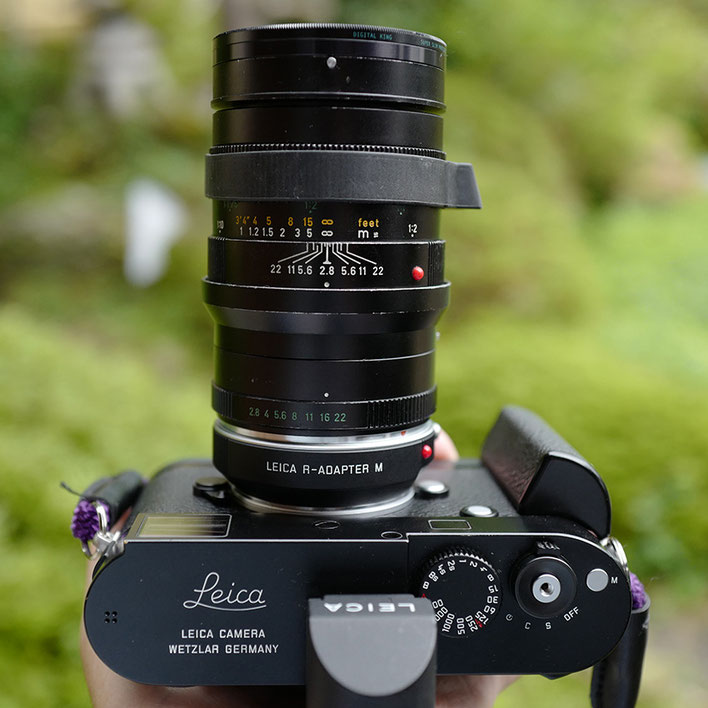 Leica M-P Type 240 + MACRO-ELMARIT-R 60mm F2.8