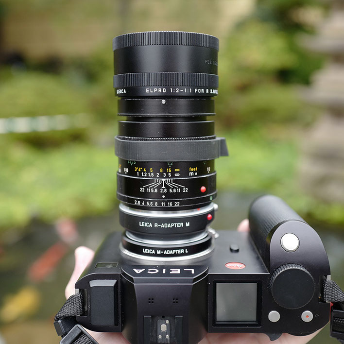 Leica SLに LeicaSL+Leica Macro-Elmarit-R 60mm f2.8+  ライカR ELPRO 等倍アダプターアポエルマリート 100mm f2.8