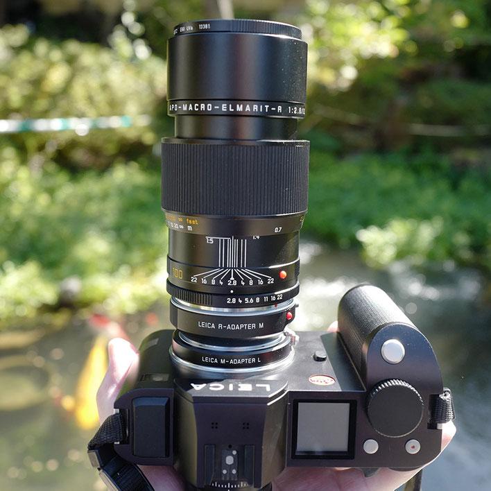 LeicaSL+Leica R Macro Lens Apo-Macro-Elmarit-R 100mm f2.8 アポ・マクロ・エルマリート R f2.8/100mm ASPH.