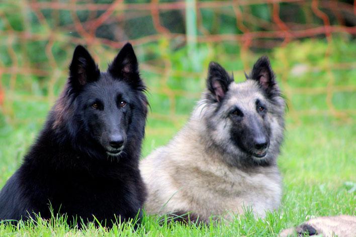 O'Kami et Ombrelune de Kertanhyys, deux soeurs, deux couleurs, deux psychés, deux amours