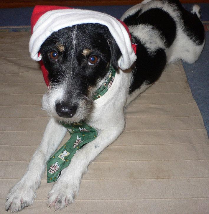 Weihnachtshund Bowser