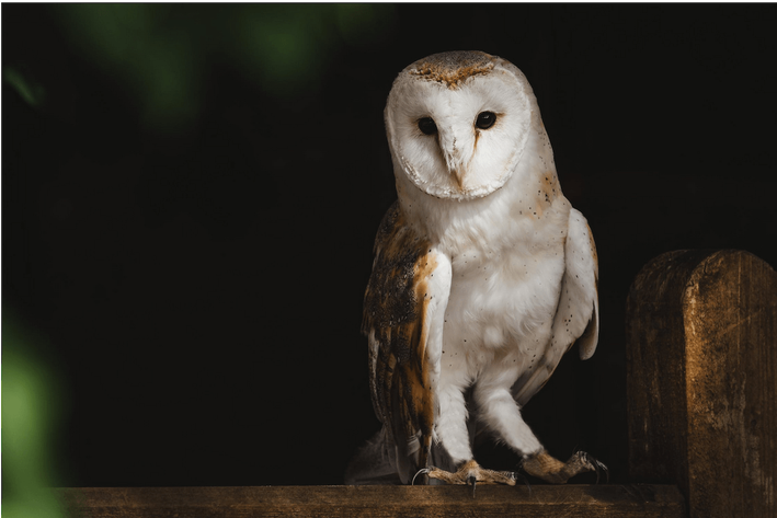 Is being an early bird or night owl better? Does either affect your sleep and weight loss? Find out if being a night owl vs. an early bird is best for weight loss or maintaining your weight. #weightloss #weightmaintenance #nightowl #earlybird #sleep