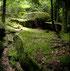 Description du circuit de rando vtt moyennement facile dans les bois de saint Goussaud