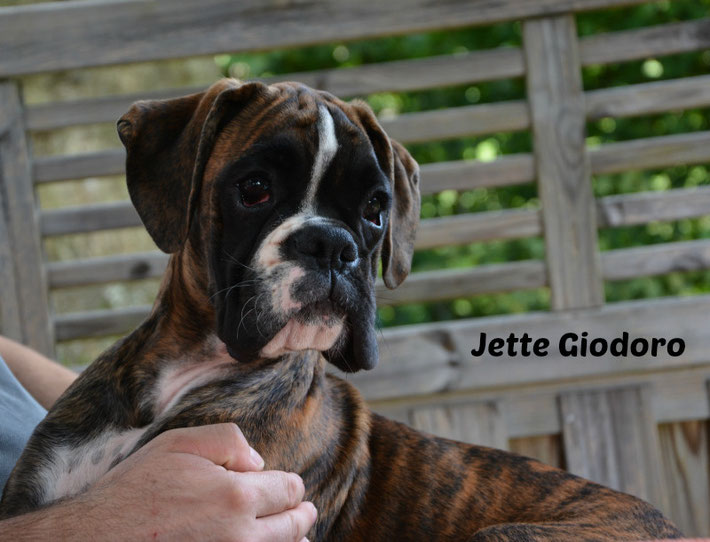 Jette Giodoro - 30.08.2014 - 4 months old