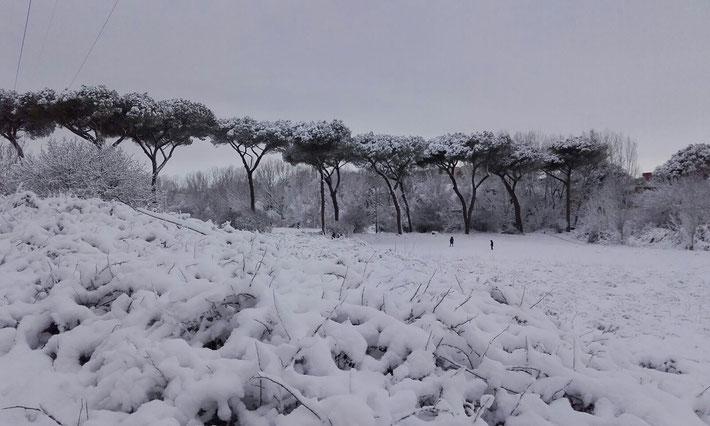 Neve al Parco regionale urbano di Aguzzano - IV Municipio -.