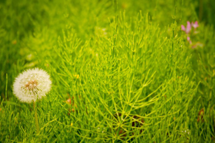 種をまく|ブレイブトレイン|ブログ