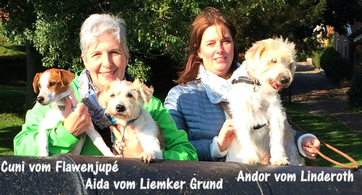 Kromfohrländer Familientreffen in Papenburg