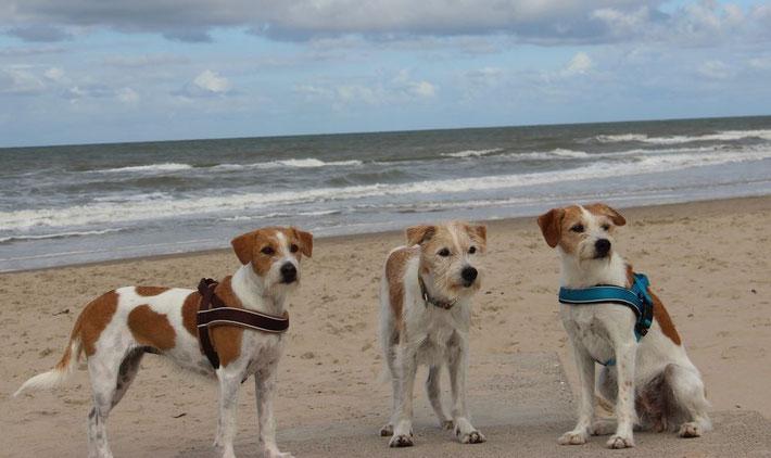 Die Flawenjupé-Kromis machen Urlaub in Callantsoog / September 2015