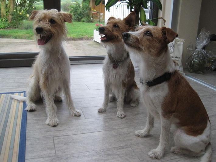 Flax Tochter - Afehsy (rechts) mit ihren Kindern Alex und Aica