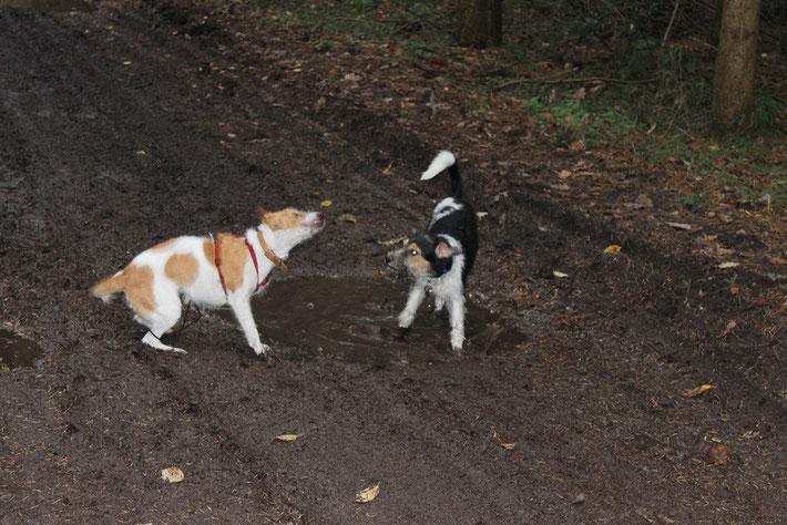 Das war der Beginn des Spazierganges...ein ordentliches Schlammbad! 2 aus dem gleichen Holz;-)