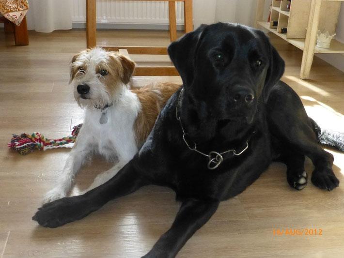 Kismo und sein dicker Kumpel Charly
