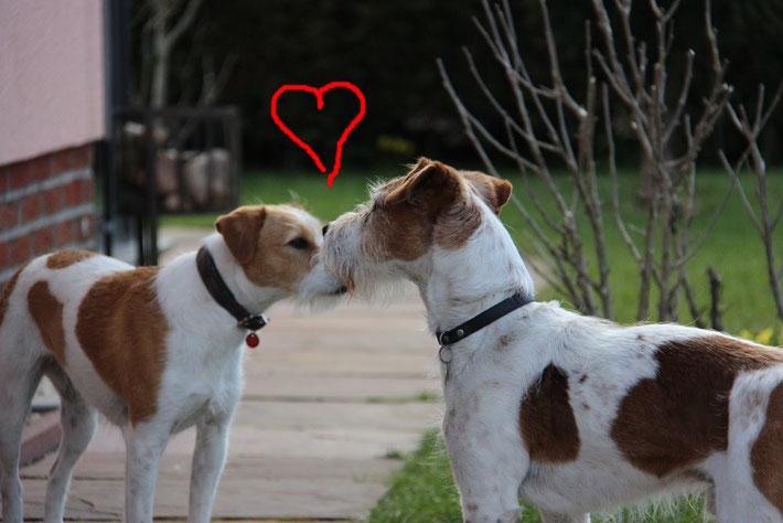 Brezel & Drago...2 die sich lieben ♥