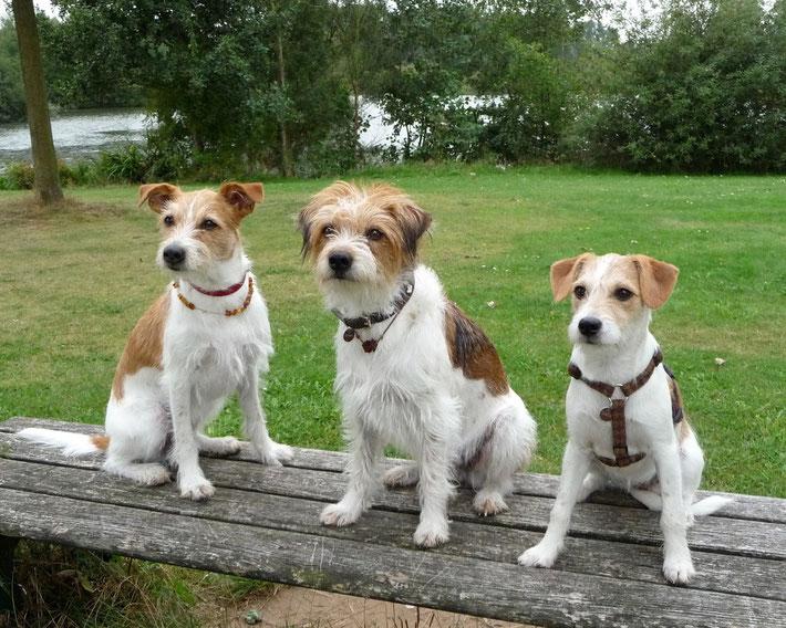 Chloe, Asarja und Bentje
