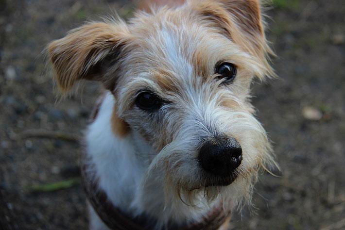 Flax 11,5 Jahre alt