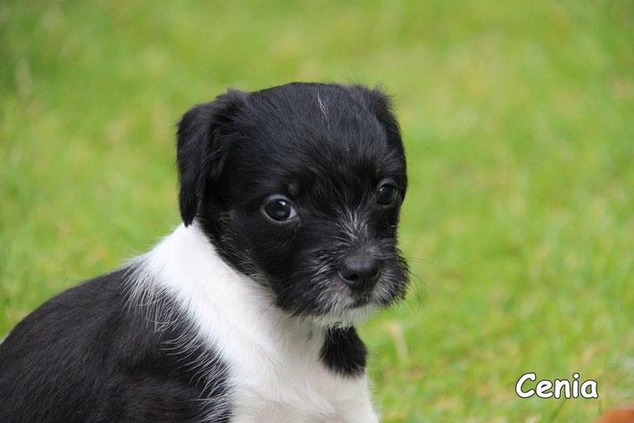 Cenia - 6 Wochen alt