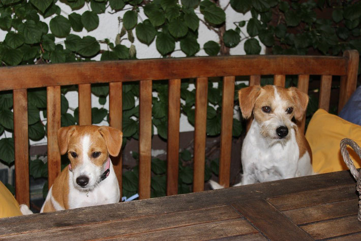Mama und ich warten auf unseren Besuch...
