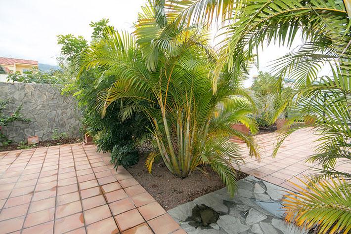 Palmen auf der Pool-Terrasse