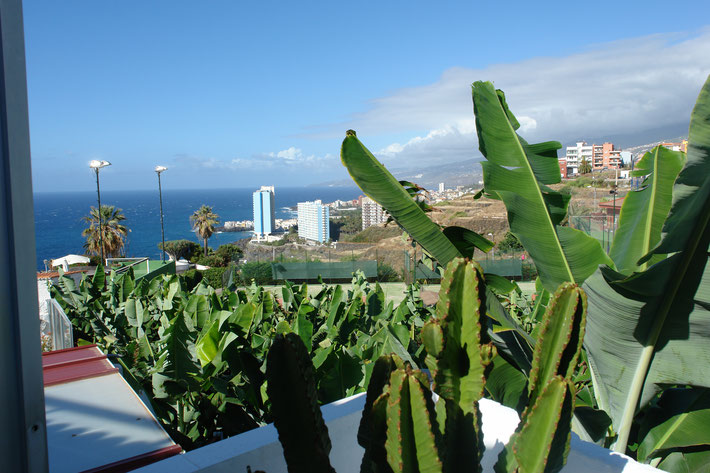 Meerblick vom Balkon durch Bananenpflanzen