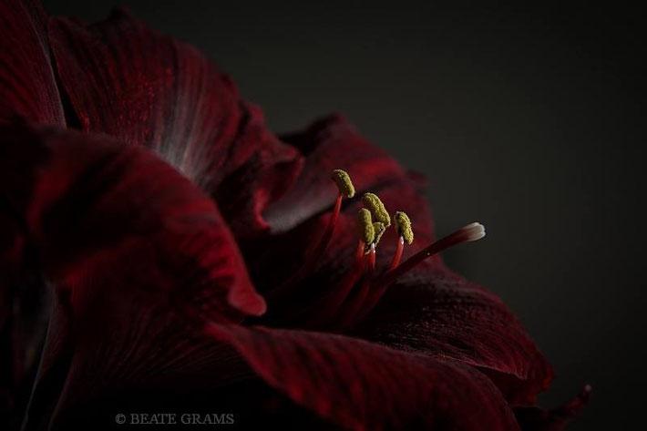 Kameradaten:  Nikon D700; Blende: f8 Belichtungszeit:1/8s  ISO: 400 Lichtwert: -2 Schritte
