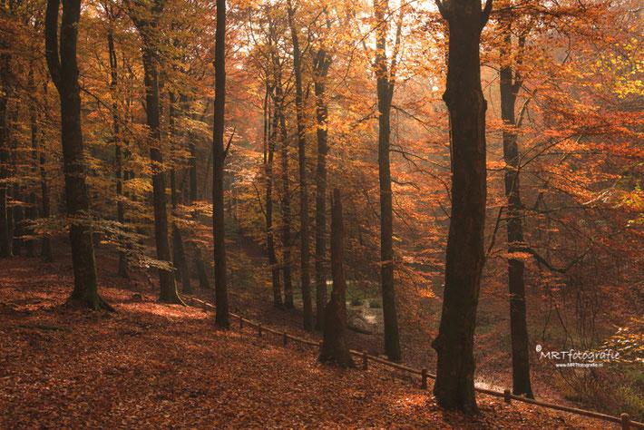 In dit herfstbos is rust in de foto gecreëerd  door het lage hekje vanuit de hoek te laten komen, waardoor je het gedeelte min of meer isoleert.          Sluitertijd 1/60 sec., diafragma f/11, ISO 400