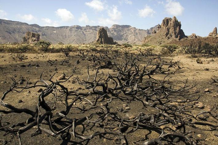 Roques de Garcia, davor Zeitzeugen von der ewigen Brandgefahr.