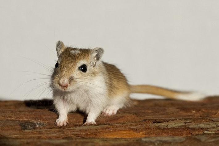 Unser neuestes Familienmitglied, klein Jeronimo (ca. 5 Wochen alt).