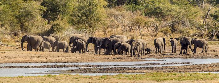 Durch seine Größe bietet der Park Raum für über 10.000 Elefanten.