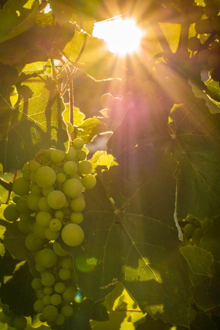 Andrea - Foto 4 - Sonnenuntergang am Weinberg