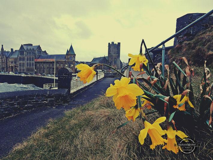 Sightseeing Aberystwyth Castle