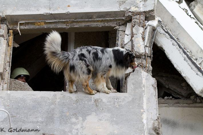 Kalle bei der Trümmersuche