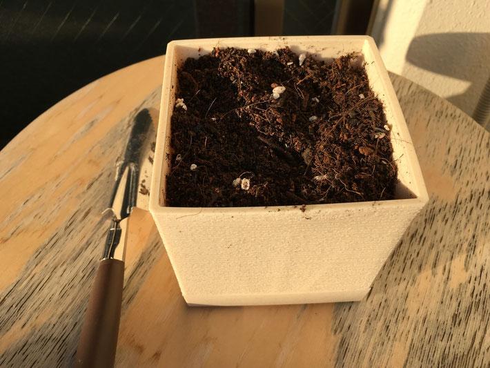 豊橋の居酒屋さんがアボガドを栽培するための道具2