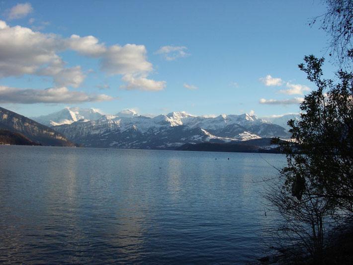 Thunersee mit Blick auf Alpen