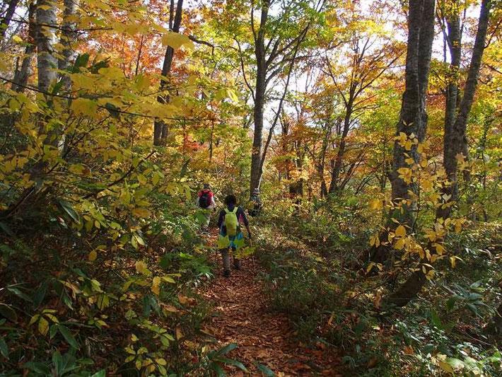 階段を登り切ったあとは、刈込池までぶな林の紅葉が迎えてくれる。来て良かったぁぁ!!