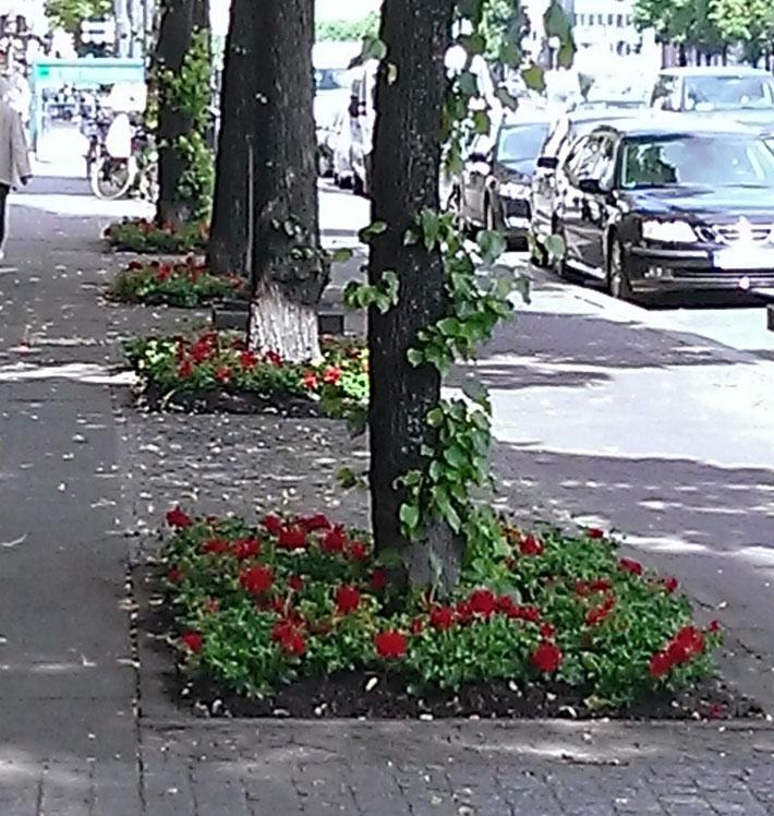 Hier wieder die aktuellste Bepflanzung von unseren schönen Kaiserdamm. Diesmal rote Geranien.