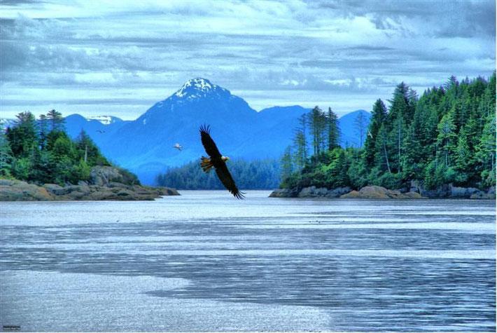 Adler - Eagle in Canada