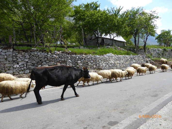 High Traffic in Albania